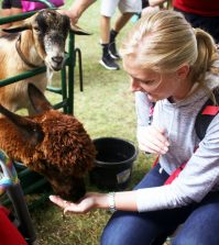 Emily Young feeds a llama. Photo by Sarah Rohleder